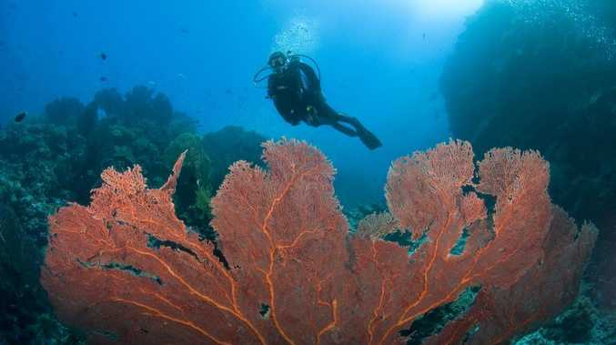 More than 200 divers will take part in the world record attempt today.